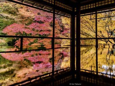 秋の紅葉 瑠璃光院~比叡山~大津の旅