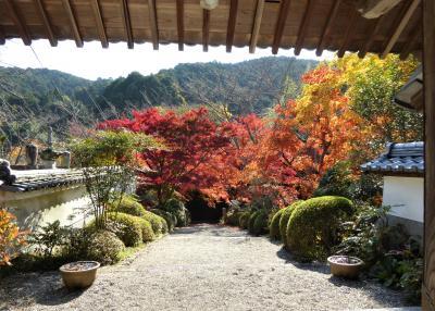 大阪南部をブラブラ・・・紅葉真っ盛りの寺巡り♪