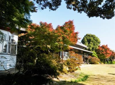 「旧秋元別邸」の紅葉_2020_一部が色付き始めました(群馬県・館林市)
