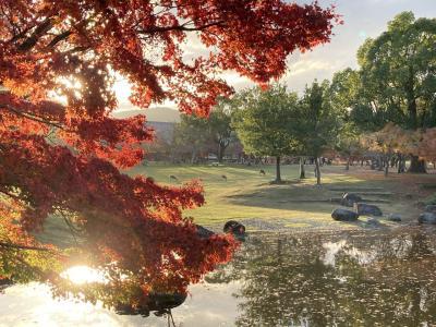 秋の奈良公園を味わい尽くす