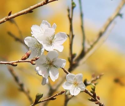 四季桜ツーリング 2020
