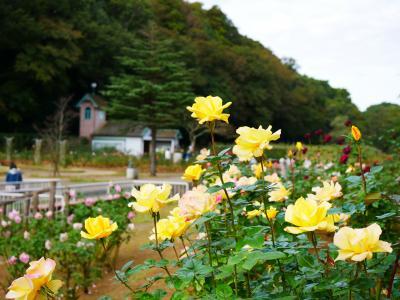 市川市動植物園へ久しぶりのお出かけ-2020.11-