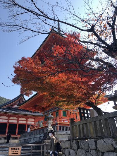 GOTO使って、京都へ!
