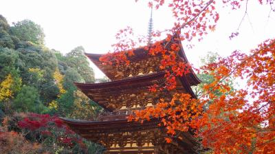 湖東三山(西明寺)の紅葉と金剛苑