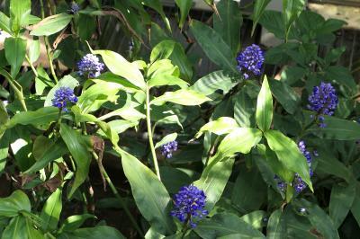 秋の川口グリーンセンター♪ Vol.4 南国のジャングル♪