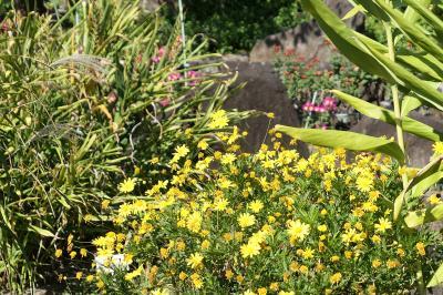 秋の川口グリーンセンター♪ Vol.7 ロックガーデンに咲く秋の花♪