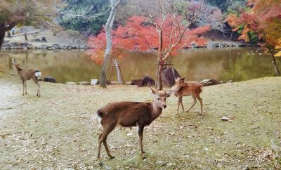 あをによし古都奈良で紅葉と鹿を愛でる~興福寺/春日大社/新薬師寺~