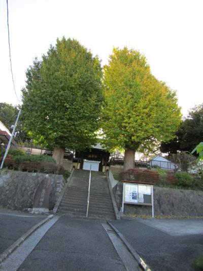 盛徳寺の2本の銀杏の木の色付き-2020年秋