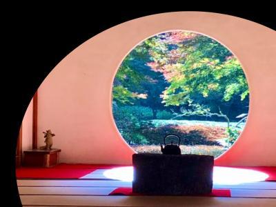 2020 鎌倉の紅葉を楽しむ