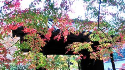 シニア夫婦温泉旅 武雄温泉&福岡と佐賀の紅葉を訪ねて① 秋月城跡