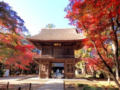 魅惑のグラデーション☆平林寺の紅葉はやっぱり素敵でした!