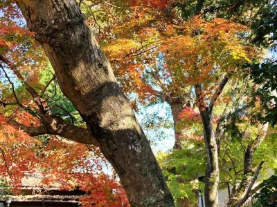 千葉県佐倉市内で紅葉見物しよう。