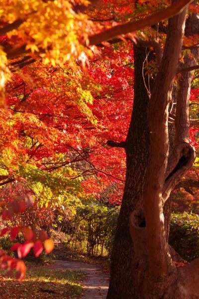 今年は見頃が早かった模様の竜田公園の紅葉