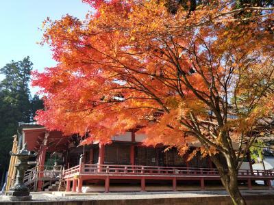 GoTot旅第4弾、汗ばむ陽気の京都で紅葉狩り おまけで大塚国際美術館。 その1 比叡山編