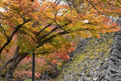 懐古園の見事な紅葉2020~穴城・野面積み・田切地形の小諸城址とイタリアンHARADA~(長野)