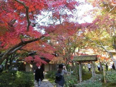 晩秋の大阪万博記念公園 日本庭園で「紅葉三昧の一日」を過ごす。(2020)