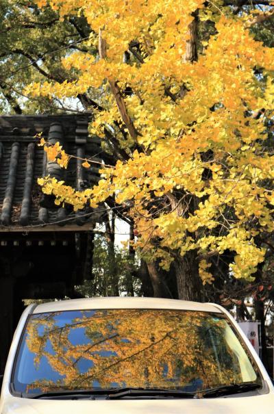 GOTOでお得に篠島へ海の幸を味わう♪ 知立遍照院、篠島、吉浜人形小路♪