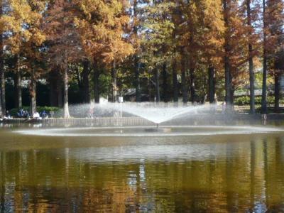 久しぶりに別所沼公園に足を延ばしました。いつものことながら、人出が多い、人気の公園です。