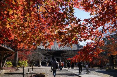 20201124-2 京都 近所でしたので、真如堂。こっちは紅葉見頃。