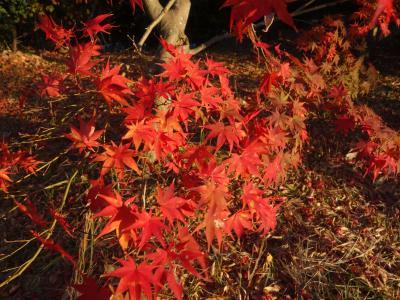 大高緑地で紅葉を愛でる。