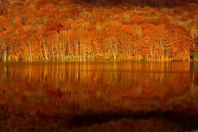 十和田湖・奥入瀬の紅葉_3.早朝の蔦沼と奥入瀬渓流