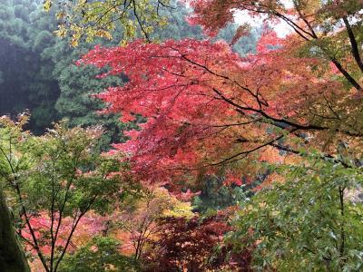 奥日田温泉梅ひびきと英彦山の紅葉