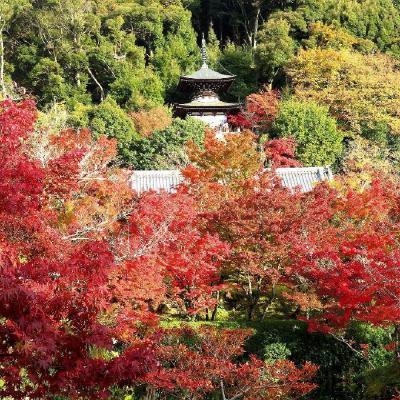 団塊夫婦の2020年日本紅葉巡りドライブー(京都3)二度目も感動・永観堂