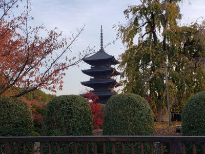 Go to で秋の京都へ