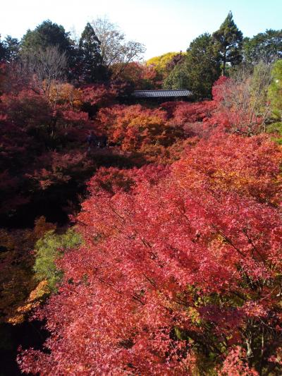 紅葉を満喫!秋の京都旅①