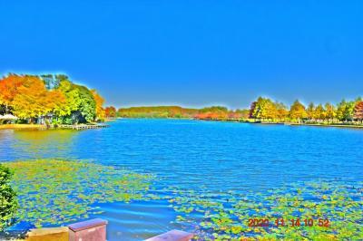 【東京散策111-2】東京23区最大!広すぎる水元公園を歩いてみた(後編)