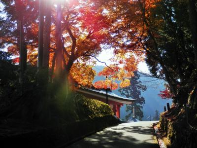 比叡山紅葉祭りへ 2020
