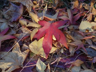 大高緑地で落葉に埋まる。