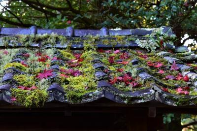 朝観光(32-2) 京都の紅葉(滋賀県大津市)
