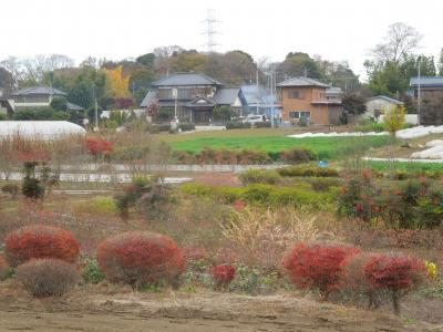 晩秋の南永井の風景・・植木畑付近
