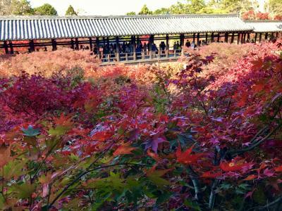 東福寺~名にし負う通天橋の紅葉