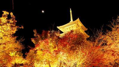 GO TO!京都 紅葉狩り1週目(前半)