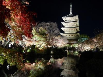 それでも京都に行こう!①東寺ライトアップとSAKURA TERRACE