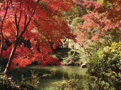 成田山新勝寺の紅葉を楽しみに、GoTo日帰り旅行