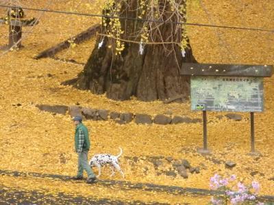 秋の広島・三次市をぶらぶらドライブ ~かわいいヤギに癒やされた♪~