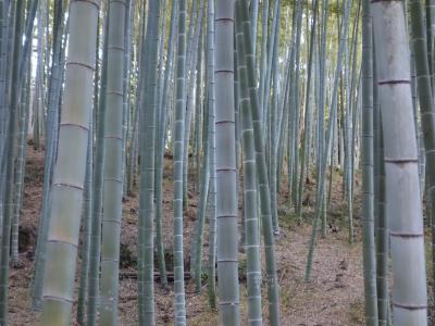 大高緑地の竹林を散策。かぐや姫も三賢人もいなかった。