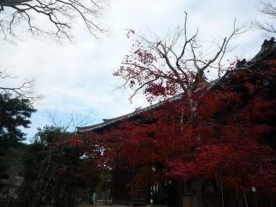 日帰り旅 紅葉狩り~温泉~美山かやぶきの里