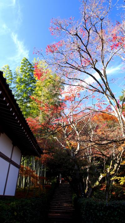 GO TO!京都 紅葉狩り1週目(後半)