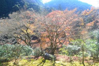 今年の京都の紅葉(その2)高山寺・神護寺
