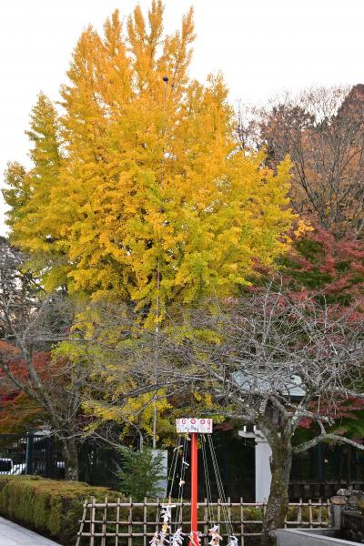 八木山動物園公園から青葉山公園へ、歩け歩け