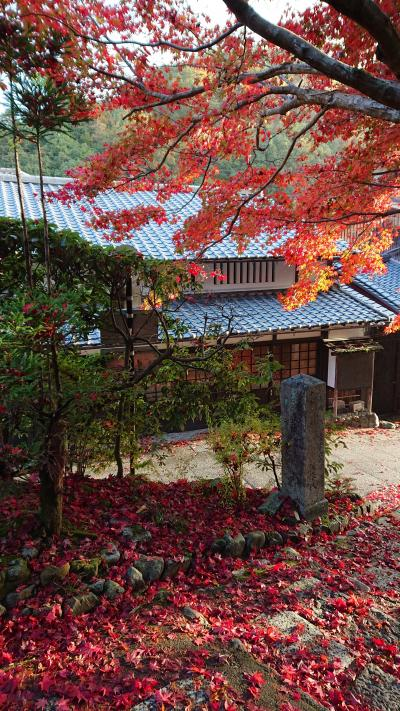 京都の紅葉を初めて見に行きました