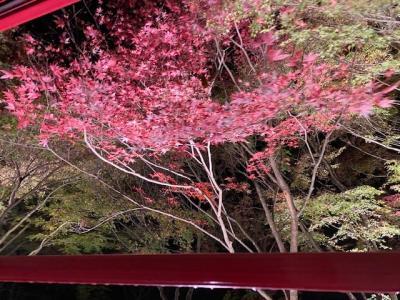 今年の京都の紅葉(その3)天龍寺・宝厳院・渡月橋・嵯峨野・トロッコ電車