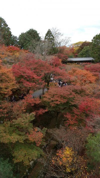 紅葉の京都  中村藤吉