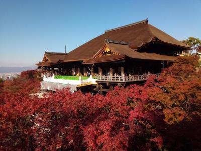 紅葉を満喫!秋の京都旅③