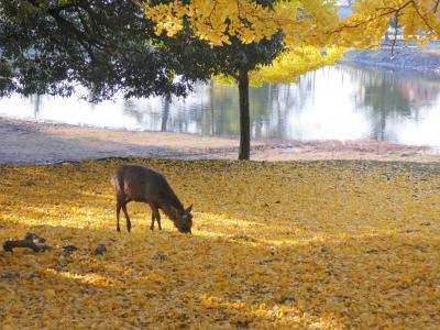 秋の奈良旅 三連チャン その一。