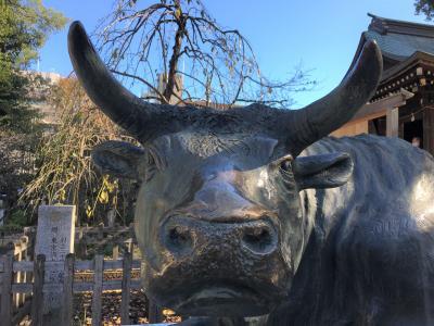 撫で牛をさがして 布多天神社